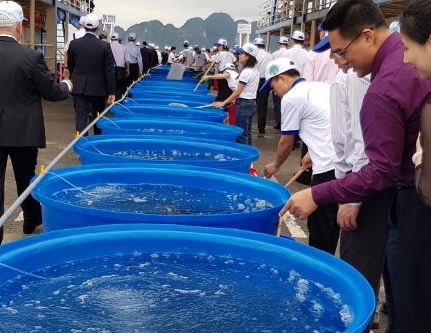 Thả gần 5,3 triệu con giống tái tạo nguồn lợi thủy sản Vịnh Bắc Bộ