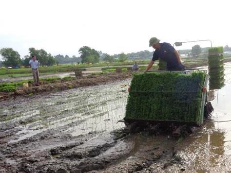 Vĩnh Long đẩy mạnh cơ giới hóa trong sản xuất nông nghiệp