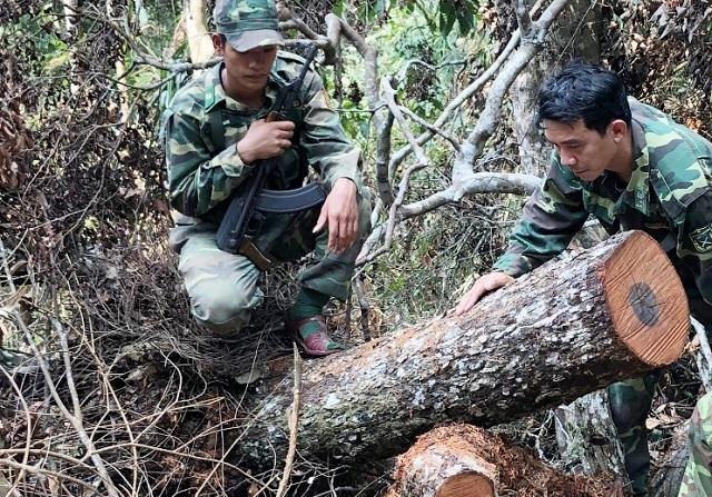 Khởi tố vụ phá rừng nghiêm trọng tại Phong Nha - Kẻ Bàng