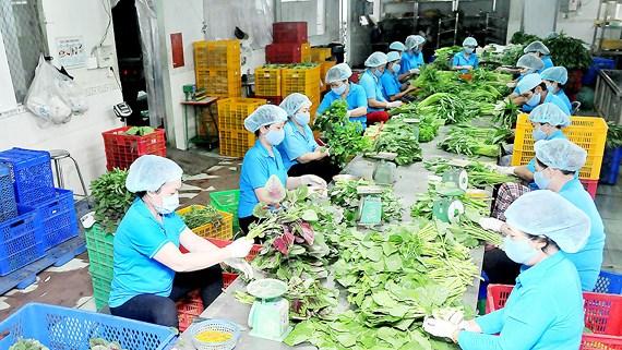 Khuyến khích các hộ nông dân sản xuất kinh doanh giỏi tham gia vào hợp tác xã