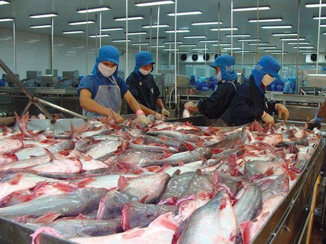 Trung Quốc: Thị trường nhập khẩu cá tra lớn nhất của Việt Nam