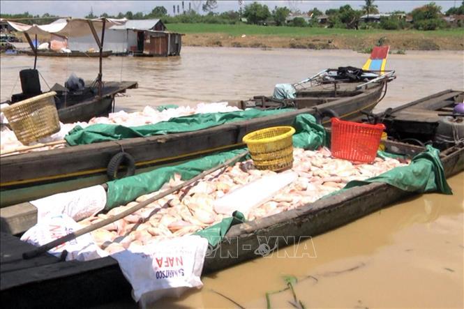 Xác định nguyên nhân tình trạng cá chết trên sông La Ngà