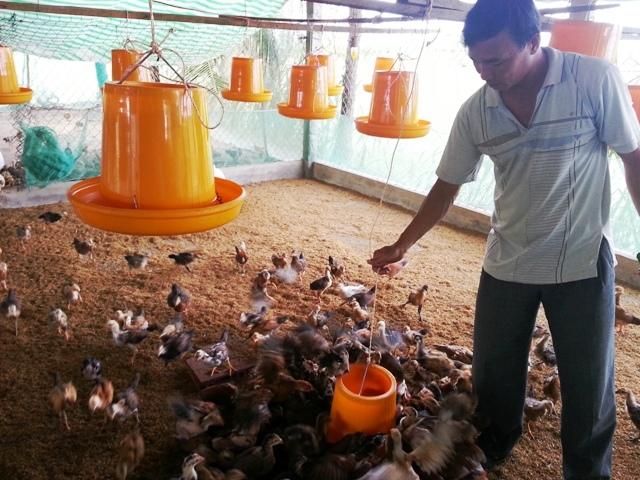 Chăn nuôi gia cầm hướng tới phát triển tập trung