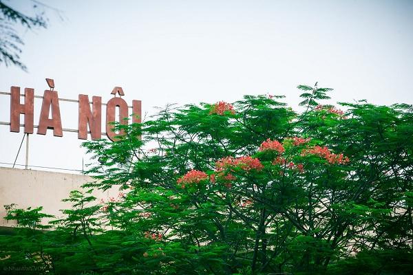 Tháng 5 - Hà Nội mùa hoa phượng