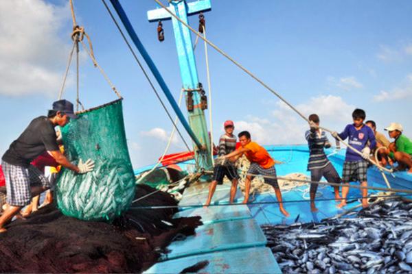 Thành lập Ban Chỉ đạo Quốc gia về chống khai thác hải sản bất hợp pháp