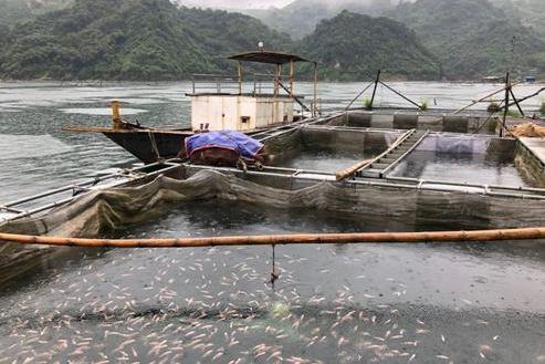 Hỗ trợ Bạc Liêu phòng, chống dịch bệnh thủy sản