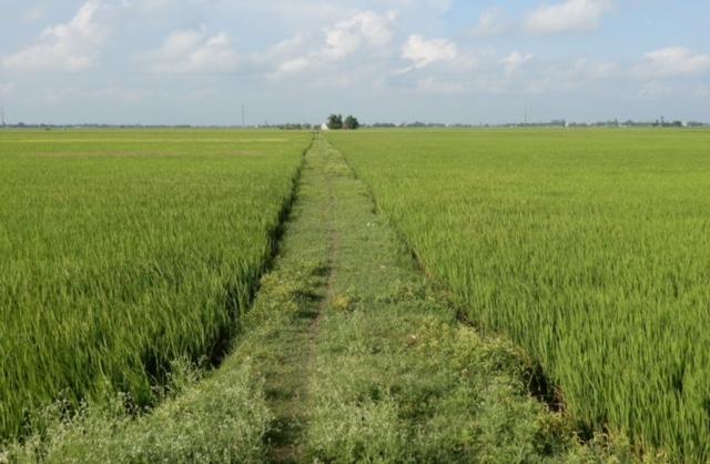 Chuyển mục đích sử dụng đất tại tỉnh Bắc Giang