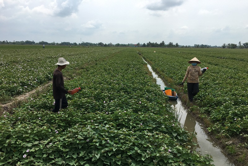 Đồng bằng sông Cửu Long trước thách thức của biến đổi khí hậu