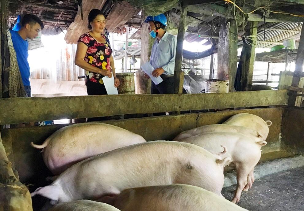 An Giang công bố dịch tả lợn châu Phi