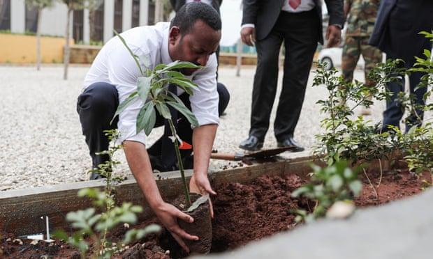 Ethiopia trồng hơn 350 triệu cây xanh chỉ trong một ngày
