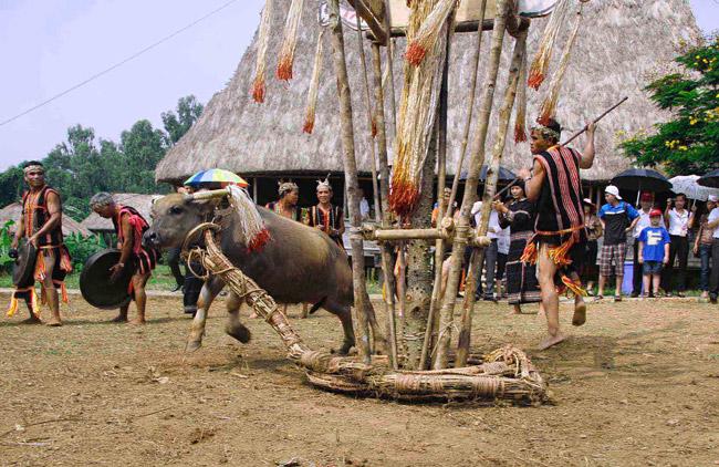 Tục đâm trâu mừng nhà rông mới của người Giẻ Triêng