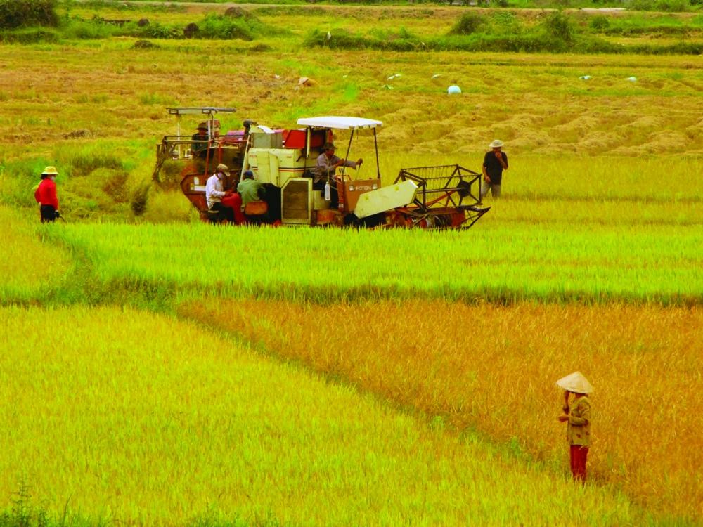 Chuyển mục đích sử dụng đất trồng lúa tại tỉnh Hưng Yên
