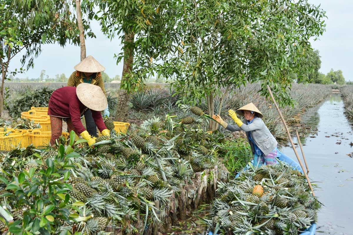Bài 5: Đưa Đồng bằng sông Cửu Long phát triển bền vững