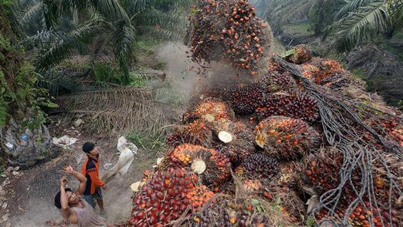 EU áp thuế đối với dầu diesel sinh học Indonesia