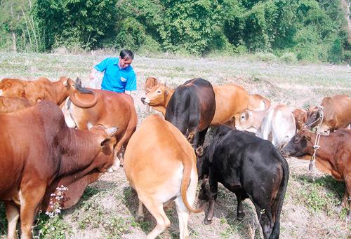 Đồng hành cùng nông dân phát triển sản xuất