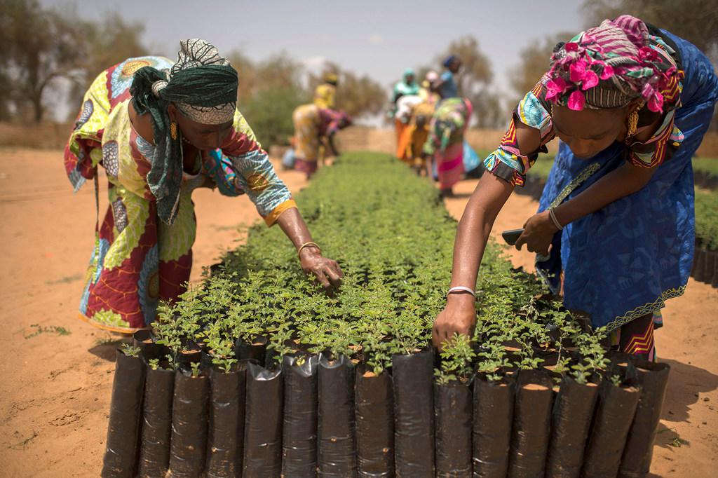 Đối thoại lãnh đạo cấp cao về an ninh lương thực ở châu Phi