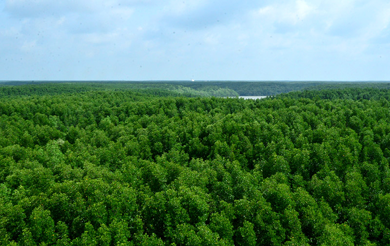 Khám phá rừng ngập mặn Cần Giờ