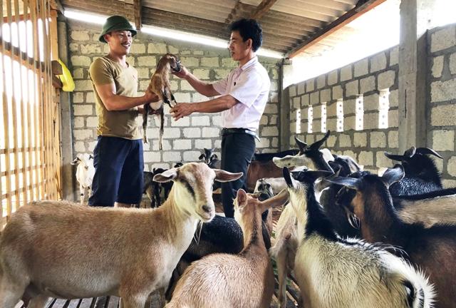 Phát huy hiệu quả của Tổ Tiết kiệm và vay vốn tại Bố Trạch, Quảng Bình