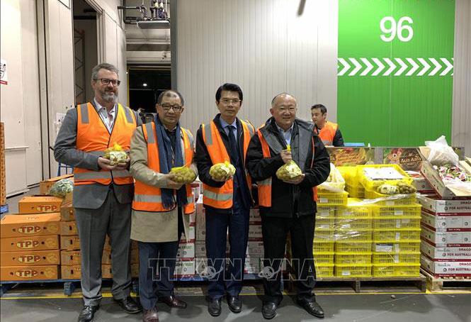Nhãn tươi Việt Nam lần đầu tiên ra thị trường Australia