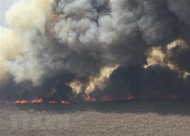 Cháy rừng thiêu chết hàng triệu động vật hoang dã tại Bolivia