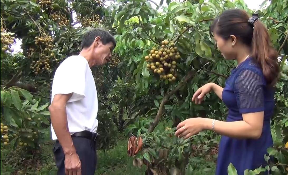 Sơn La xây dựng thương hiệu cây ăn quả chủ lực