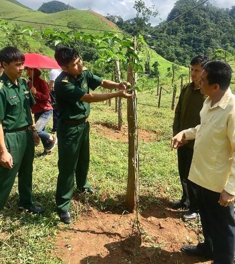 Bộ đội Biên phòng giúp dân thoát nghèo từ cây chanh leo