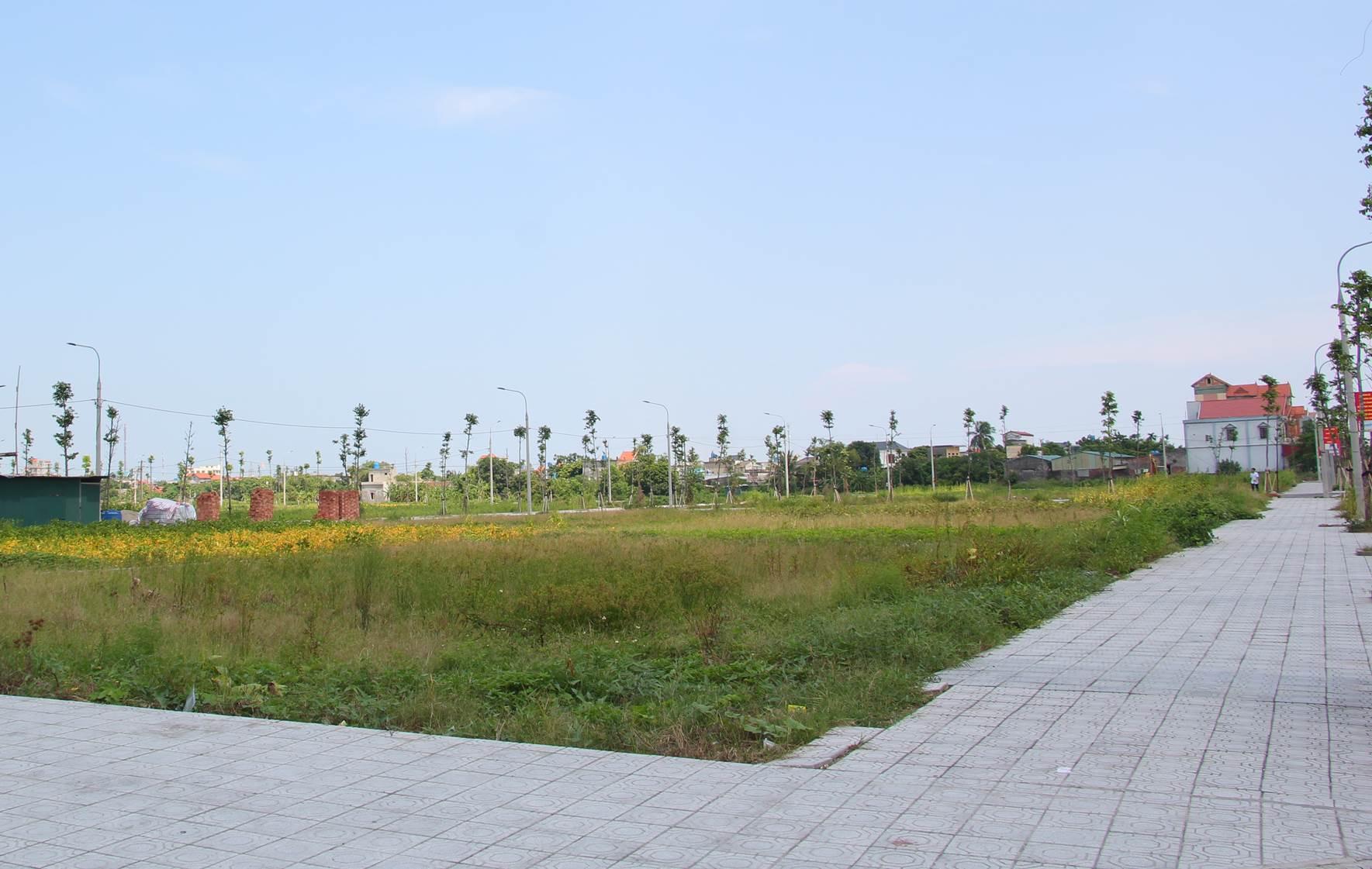 Tiền Hải (Thái Bình): Đẩy nhanh tiến độ, nâng cao hiệu quả công tác đấu giá quyền sử dụng đất