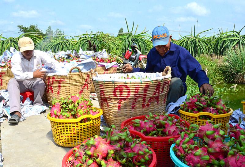Phối hợp xử lý tình trạng ùn ứ nông sản tại cửa khẩu