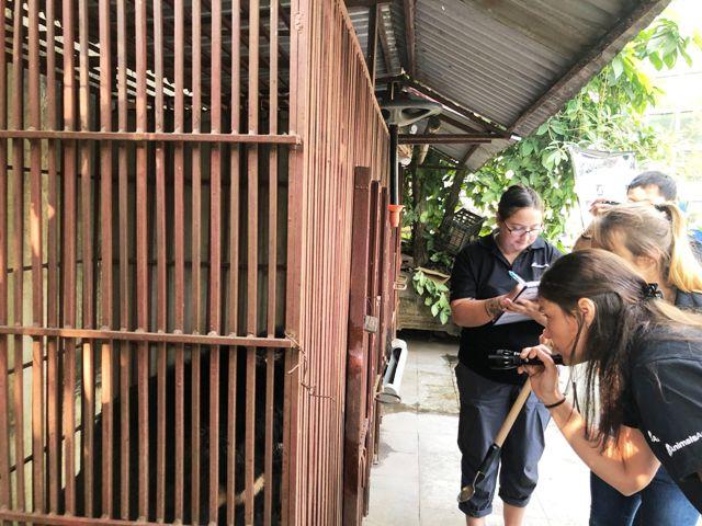 Cứu hộ gấu ngựa 10 tuổi tại trường xiếc, Hà Nội