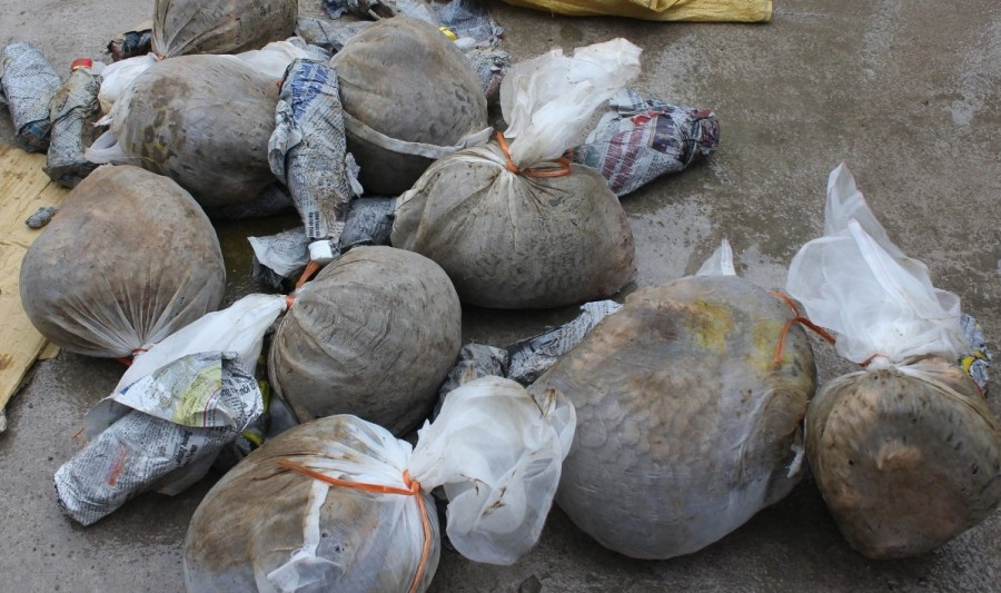 Two men arrested transporting 18 pangolins