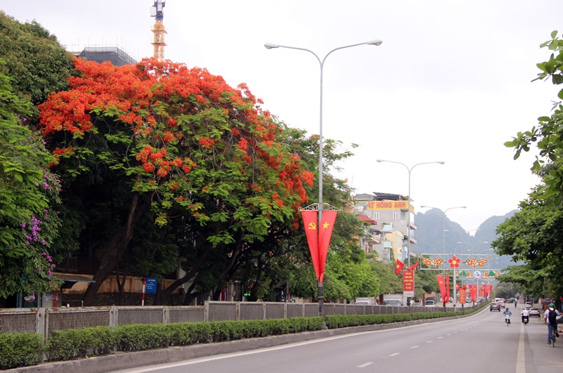 Northern city full of red colour of flamboyant