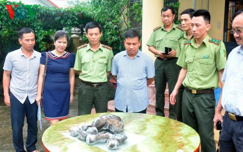 Quang Ninh hands over five otters to Vietnam National Museum of Nature