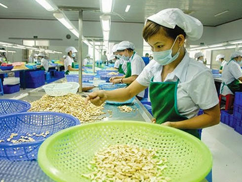 Cashew nut prices increasing on tight supplies