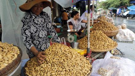 Tra Vinh helps SMEs enhance peanut value