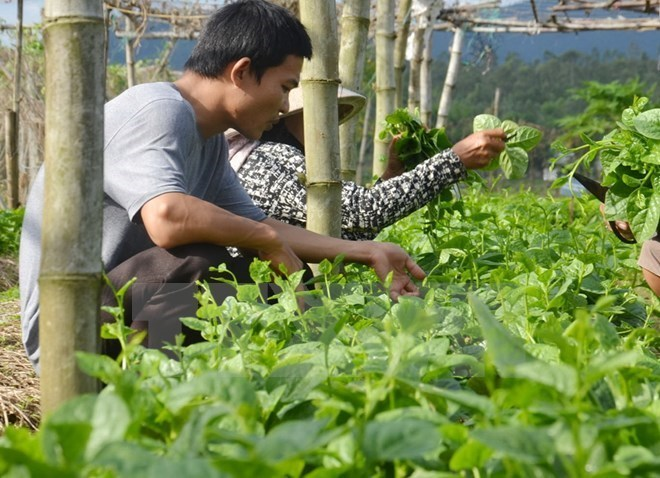 Vietnam, Israel develop supply chain of farm produce