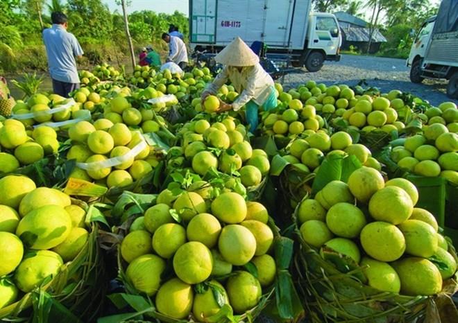 Fruit-vegetable export value surpasses USD2.1 billion