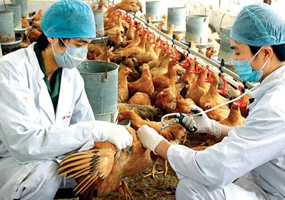 Health sector encourages people to increase preventive measures against avian flu