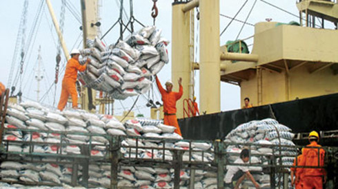 Rice exports of Vietnam face tough year ahead
