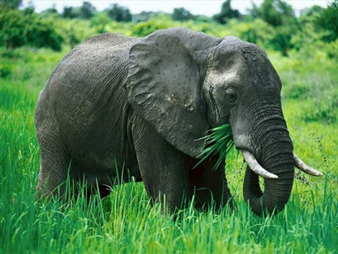 Quang Nam province to spend over VND128 billion for elephant conservation