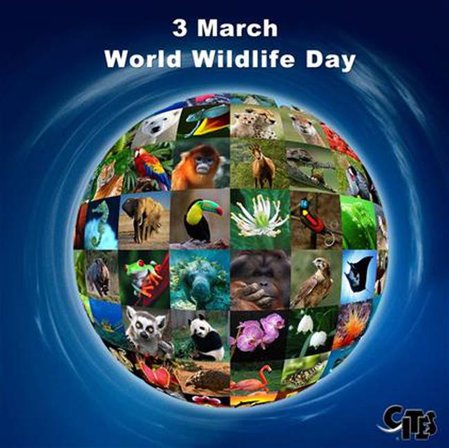 World Wildlife Day: Empowering Vietnam's youth to protect wildlife