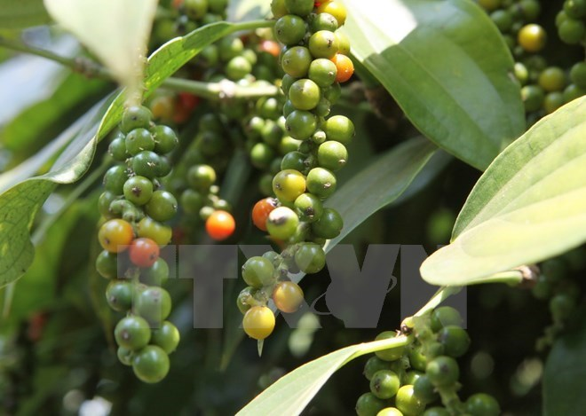 Coffee sector looks for ways to adapt to climate change