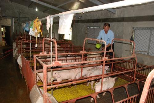 Quang Tri province expands effective agricultural production models