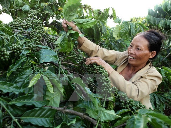 Central Highlands establishes itself as agricultural hub of Vietnam
