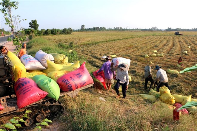 Land accumulation must benefit farmers: Deputy PM