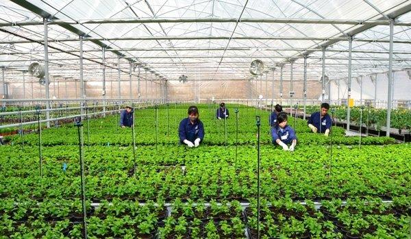 Da Nang plans seven hi-tech agricultural areas