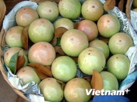 US authorizes import of fresh star apple fruit from Vietnam