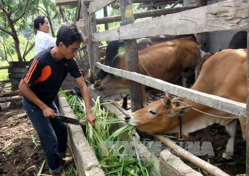 Lang Son province boosts sustainable poverty reduction among ethnic minorities