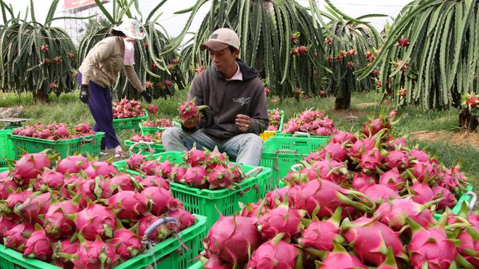 Fruit and vegetable exports bag USD1 billion