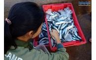 Fish market on Ly Son island