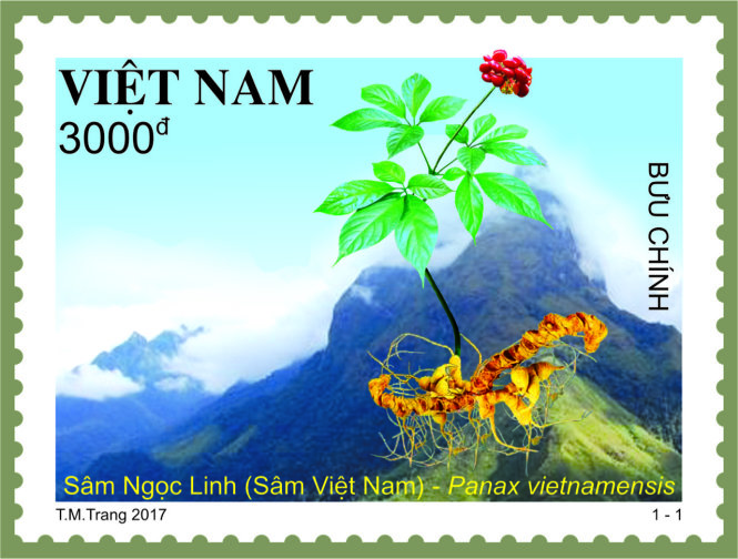Postage stamp set on Ngoc Linh ginseng to be issued in 168 countries